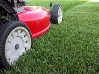 well established yard care - 1