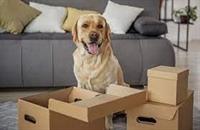 home based pet food - 1